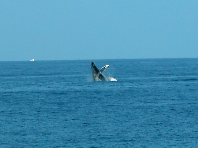 Whale Watching from the Lanai